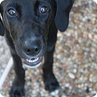 Adopt A Pet :: Kelsea - Austin, TX