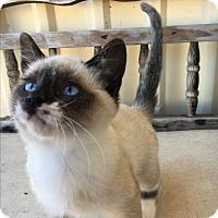 Adopt A Pet :: *Samantha* - Weatherford, TX