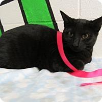 Adopt A Pet :: 16C-1451 (11/19) - Rome, GA