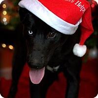 Adopt A Pet :: Zodiac - Dixon, KY
