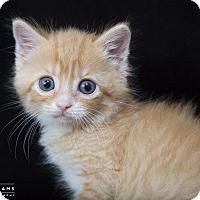 Adopt A Pet :: Figgy Pudding - Nashville, TN