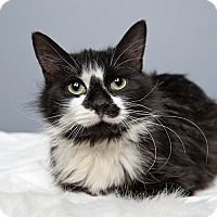 Adopt A Pet :: Boots - Wilmington, DE