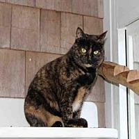 Adopt A Pet :: CALLIE - Hampton Bays, NY