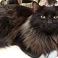 Adopt A Pet :: CIN - Diamond Bar, CA