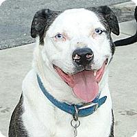 Adopt A Pet :: Skylar - Columbus, IN