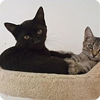 Adopt A Pet :: Parker - Bunnell, FL