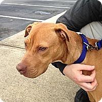 Adopt A Pet :: Link - Homewood, AL