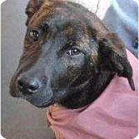 Adopt A Pet :: Tracie - Pending! - kennebunkport, ME