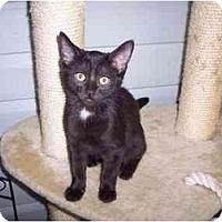 Adopt A Pet :: Robyn - Delmont, PA