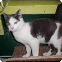 Adopt A Pet :: Sloopy - Hamburg, NY
