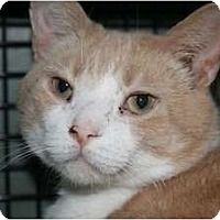 Adopt A Pet :: Butterscotch and Salem - Frederick, MD