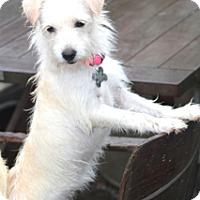 Adopt A Pet :: Ramona-perky - Norwalk, CT