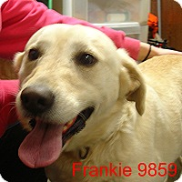 Adopt A Pet :: Frankie - baltimore, MD