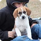 Adopt A Pet :: Julian (LRR)