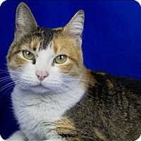 Adopt A Pet :: Bitsie - Sherwood, OR