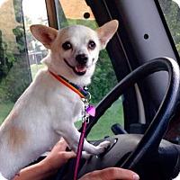 Adopt A Pet :: LINDA - Kyle, TX
