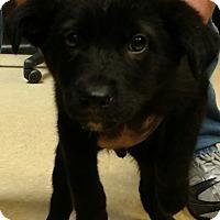 Adopt A Pet :: Lee - Alexandria, VA