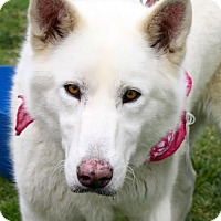 Adopt A Pet :: Anouk - Adopted! - San Diego, CA