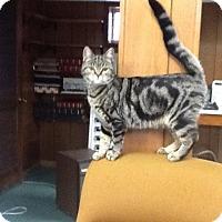 Adopt A Pet :: Addie - Berkeley Hts, NJ