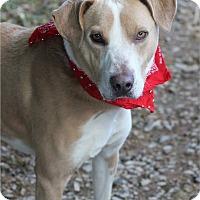 Adopt A Pet :: Briggs - Dalton, GA