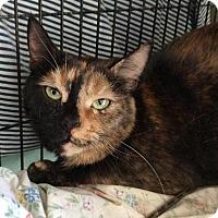 Adopt A Pet :: Molly - Breinigsville, PA
