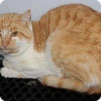 Adopt A Pet :: Sammy - Mount Sterling, KY