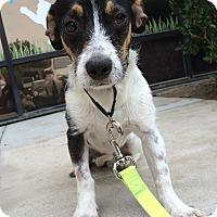 Adopt A Pet :: Dante - Mission Viejo, CA