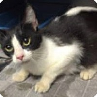 Adopt A Pet :: Donner - Chattanooga, TN