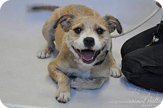Terrier (Unknown Type, Medium) Dog for adoption in Woodland Park, New Jersey - Willy Terrier