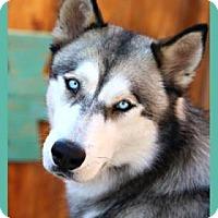 Adopt A Pet :: Sky - Scottsdale, AZ