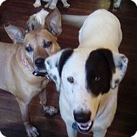 Adopt A Pet :: Sawyer - cedar grove, IN