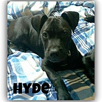 Adopt A Pet :: Hyde-Adoption pending - Des Moines, IA