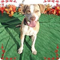 Labrador Retriever Mix Dog for adoption in Marietta, Georgia - STAR