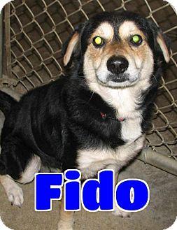 Shepherd (Unknown Type) Mix Dog for adoption in Lawrenceburg, Kentucky - #246 Fido