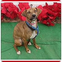 Adopt A Pet :: DARLING - Marietta, GA