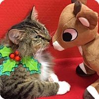 Adopt A Pet :: Layla - Pasadena, TX