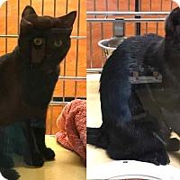 Adopt A Pet :: Pepsi & Cola - Salisbury, NC