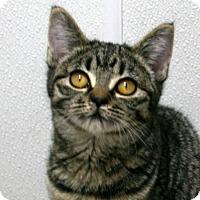 Adopt A Pet :: Lacey VALENTINE'S SPECIAL! 50% - Republic, WA