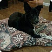 Adopt A Pet :: Lilo - Fq Litter - Livonia, MI