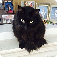 Adopt A Pet :: Zeeya - Toronto, ON
