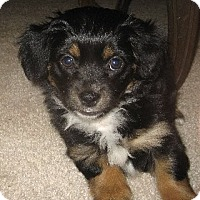Adopt A Pet :: Deva - Thousand Oaks, CA