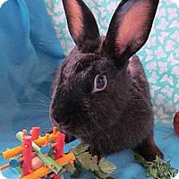 Adopt A Pet :: Daffodil - Huntsville, AL