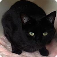 Adopt A Pet :: Zorro - Red Deer, AB