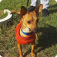 Adopt A Pet :: Oliver - Orange Park, FL