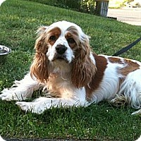 Adopt A Pet :: DAISY - Tacoma, WA