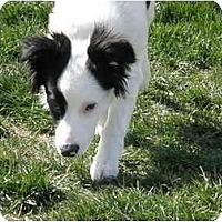 Adopt A Pet :: Liberty - Meridian, ID