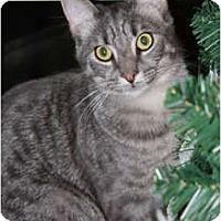 Adopt A Pet :: Tate - Washington Terrace, UT