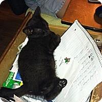 Adopt A Pet :: Plum - Chesterfield, VA
