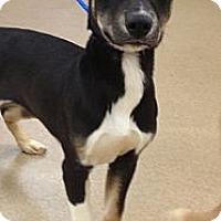 Adopt A Pet :: Flower - Lancaster, OH