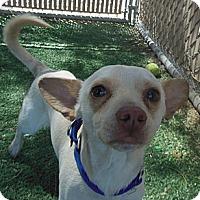 Adopt A Pet :: Nate - Phoenix, AZ